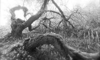 Baum-0359