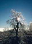 Baum-Salweide-02