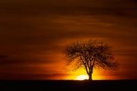 Baum Salweide 03