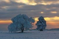 Winterbaeume-04