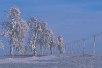 Winterbaeume 01