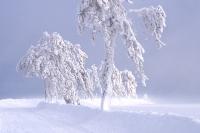 Winterbaeume 02