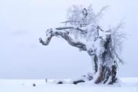 Winterbaum 02