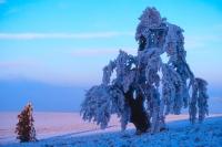 Winterbaum 03