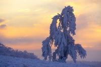 Winterbaum 04