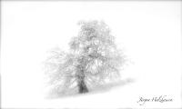 Winterbaum_2684